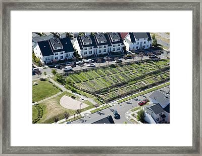 Community Garden, New Holly Mixed Framed Print by Andrew Buchanan/SLP