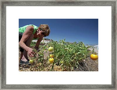 Community Garden Volunteer Framed Print by Jim West