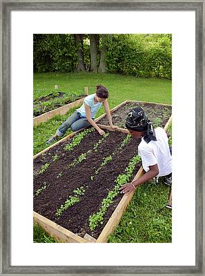 Community Garden Volunteers Weeding Framed Print by Jim West