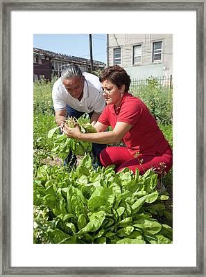 Community Gardeners Framed Print by Jim West