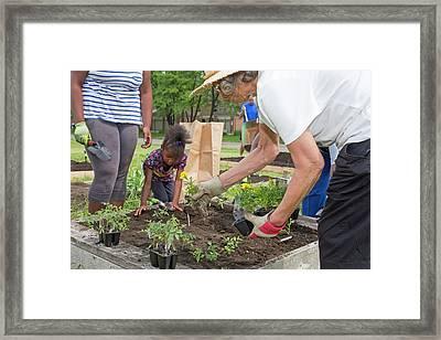 Community Gardening Framed Print