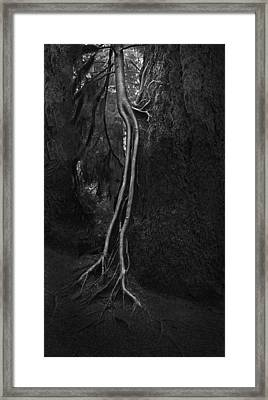 Companion Framed Print by Naman Imagery