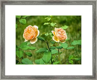 Companions Framed Print