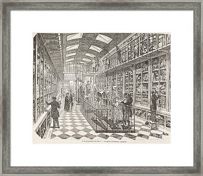 Comparative Anatomy Gallery, 1850s Framed Print