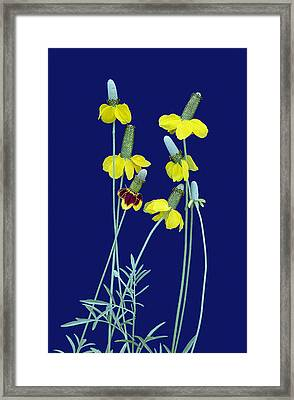 Complementary Colors  Framed Print