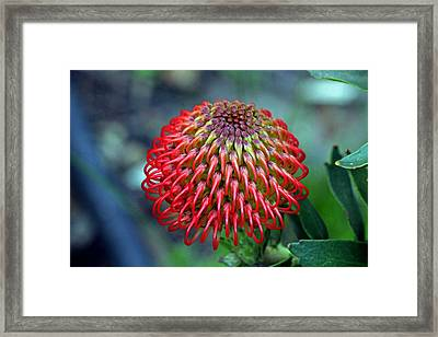 Complexities Of The Fynbos Framed Print by Chris Whittle
