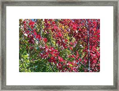 Framed Print featuring the photograph Complimentary Colors by Debbie Hart