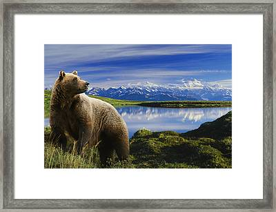 Composite Grizzly Stands In Front Of Framed Print by Michael Jones