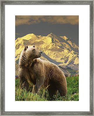 Composite Grizzly Stands On Tundra With Framed Print