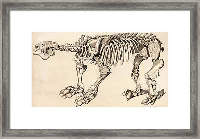 Composite Skeleton Of A Megatherium Framed Print