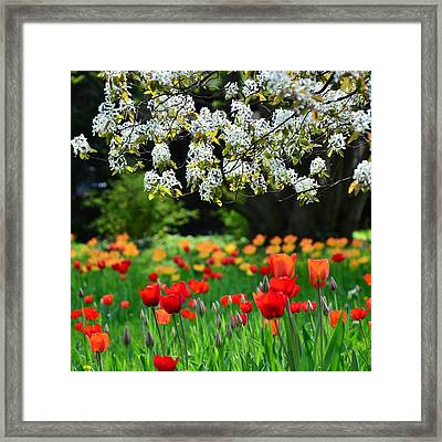 Composition Framed Print by Gynt