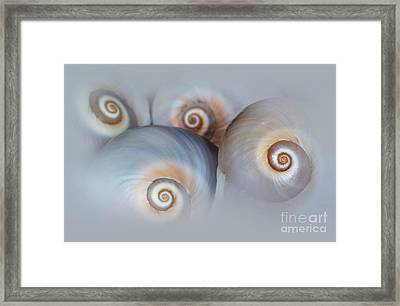 Composition Of Four Shells Framed Print