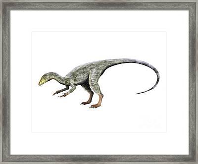 Compsognathus Dinosaur Framed Print by Nobumichi Tamura