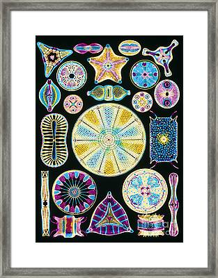 Computer Artwork Of Diatoms From Ernst Framed Print by Mehau Kulyk