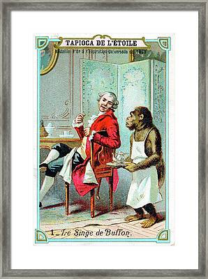 Comte De Buffon Framed Print by Universal History Archive/uig