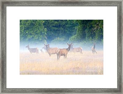 Concealed By The Fog Framed Print by Mike Dawson