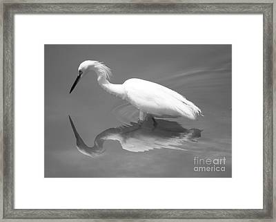 Concentration Framed Print by Carol Groenen