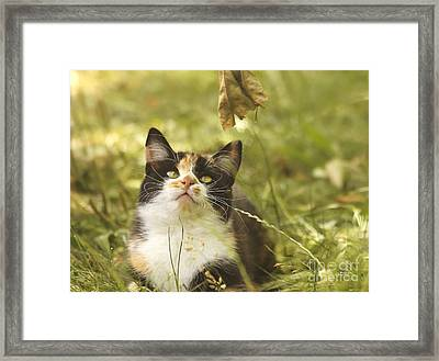 Concentration Framed Print by Jutta Maria Pusl