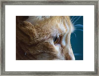 Concentration Framed Print by Tikvah's Hope