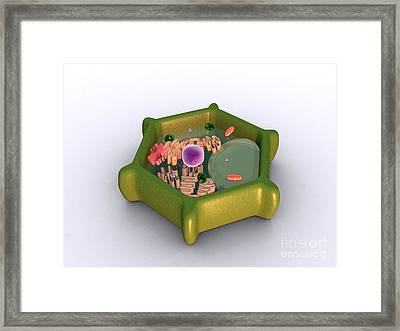 Conceptual Image Of A Plant Cell Framed Print