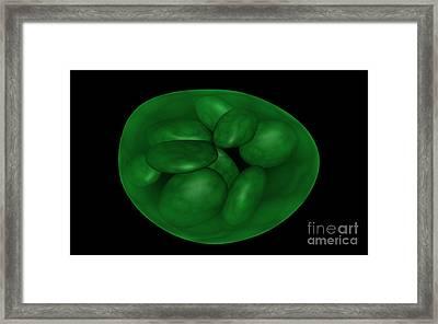 Conceptual Image Of Chloroplast Framed Print