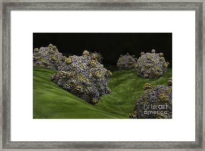 Conceptual Image Of Coxsackievirus Framed Print by Stocktrek Images