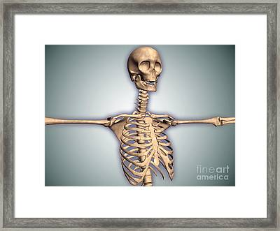 Conceptual Image Of Human Rib Cage Framed Print by Stocktrek Images