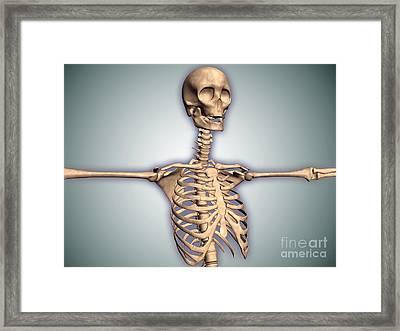 Conceptual Image Of Human Rib Cage Framed Print