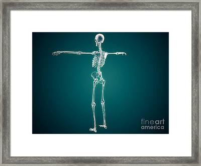 Conceptual Image Of Human Skeletal Framed Print by Stocktrek Images