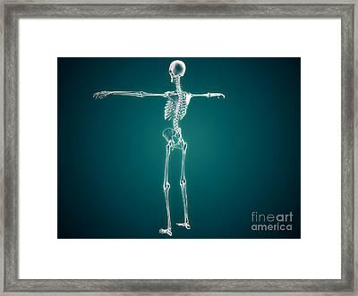 Conceptual Image Of Human Skeletal Framed Print by Stocktrek Images