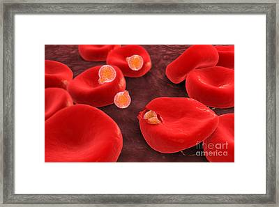 Conceptual Image Of Plasmodium Framed Print by Stocktrek Images