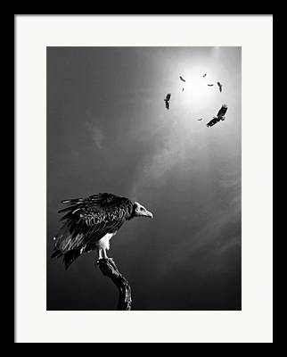 Hungry Fly Framed Prints