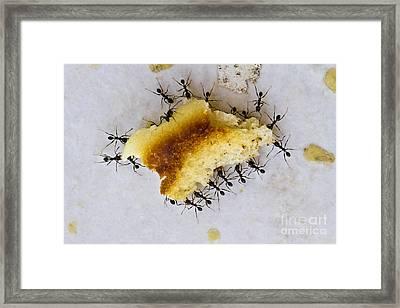 Concerted Action Framed Print by Heiko Koehrer-Wagner