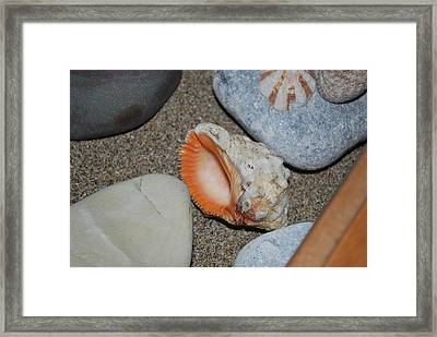 Framed Print featuring the photograph Conch 1 by George Katechis