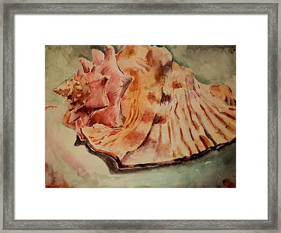 Conch Contours Framed Print