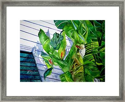 Conch House Tour Framed Print