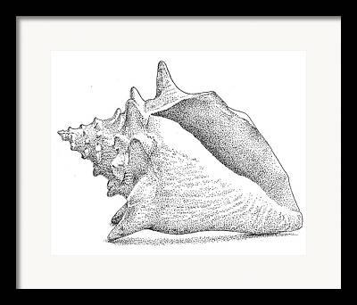 Sea Shell Drawings Framed Prints