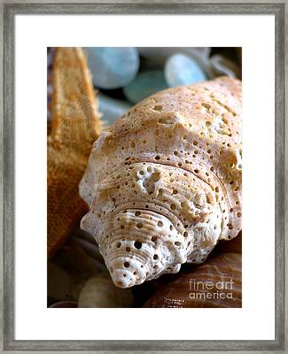 Conch Shell  Framed Print by Colleen Kammerer