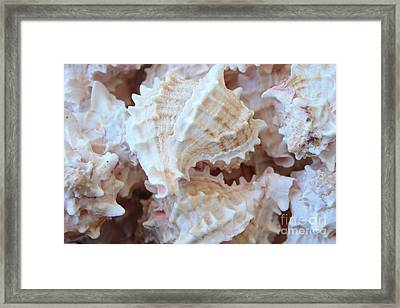 Conches Framed Print by Carol Groenen