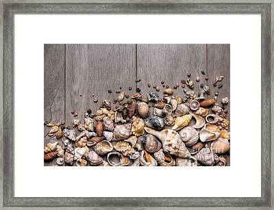 Conchs And Shells Framed Print by Carlos Caetano
