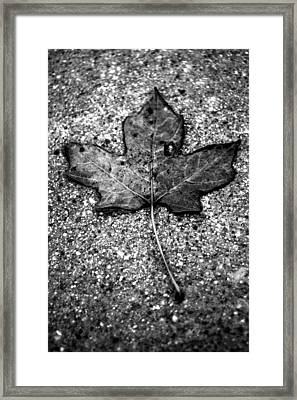 Concrete Leaf Framed Print