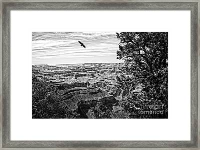Condor Over The Grand Canyon In Black And White Framed Print by Lee Craig