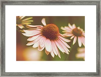 Cone Flower 3 Framed Print by Simone Ochrym