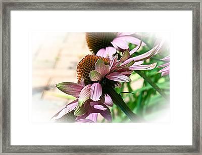Cone Flower 6 Framed Print by Simone Ochrym