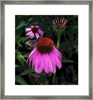 Cone Flower And Butterfly Framed Print