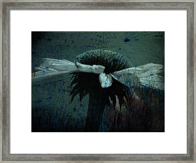 Cone Flower Bw Morning Dew With The Blues Framed Print