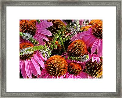 Cone Flowers And Mint Framed Print