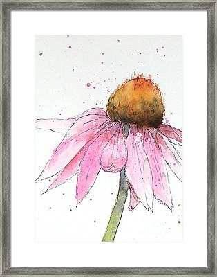 Coneflower 1 Framed Print