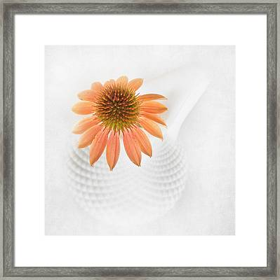Coneflower And Milkglass Framed Print by David and Carol Kelly
