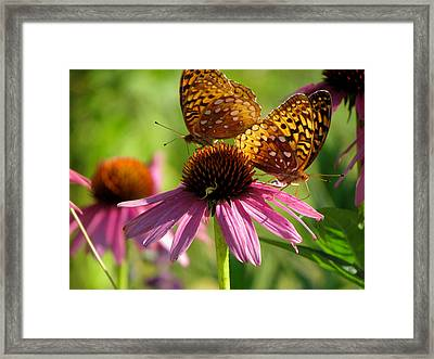 Coneflower Butterflies Framed Print